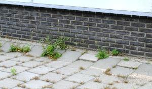 Openbare Ruimte Vrijenburg te Barendrecht